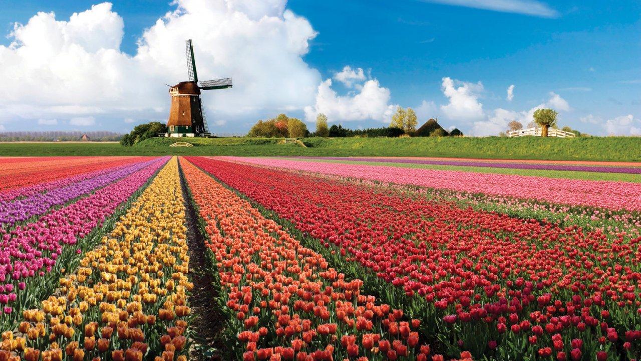 De zero waste bloembollen van BloemenStorm bij Instock Utrecht