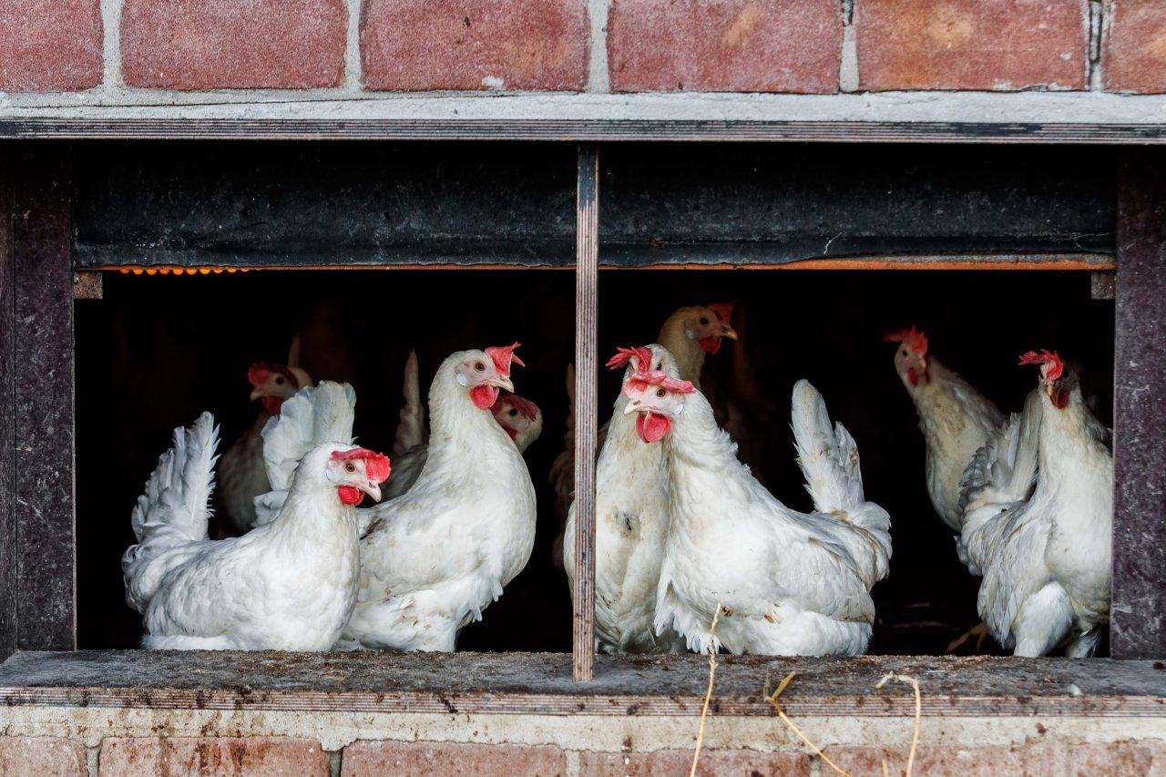 eieren gered van de verspilling